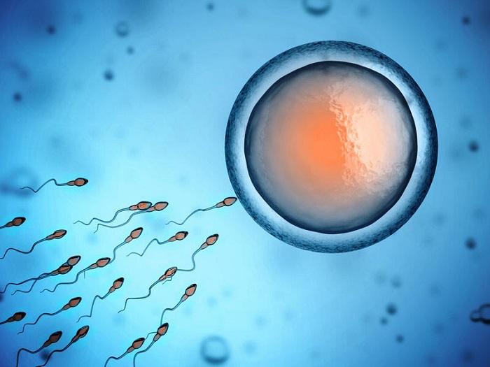 Оплодотворение клетками донора